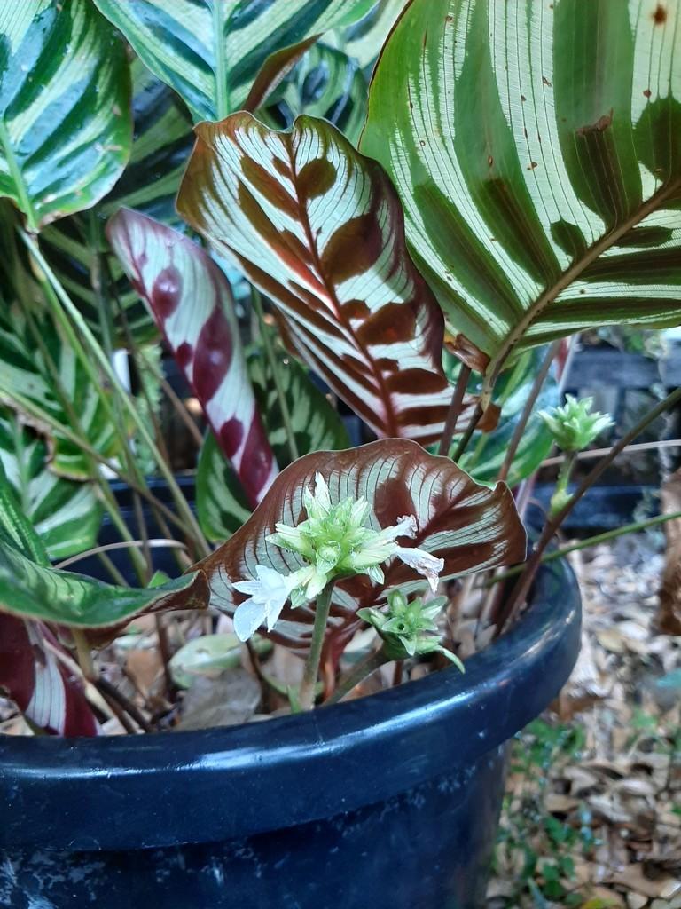 Flowering  by mozette