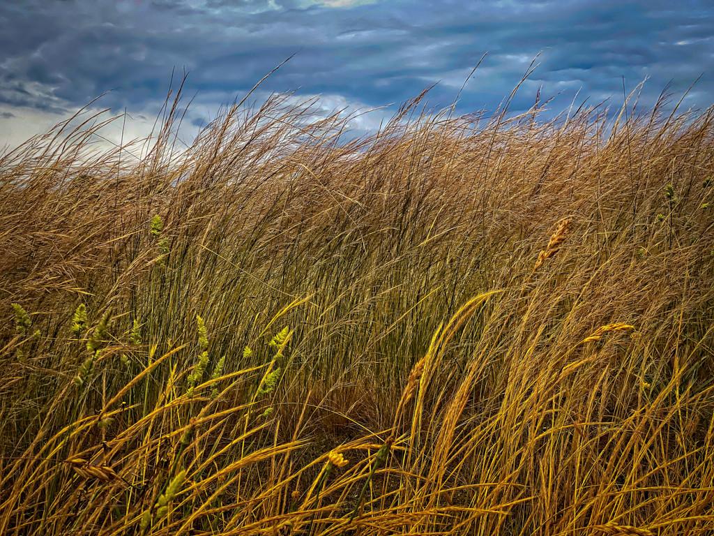 Grass and sky by fr1da