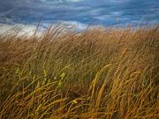 23rd Nov 2020 - Grass and sky