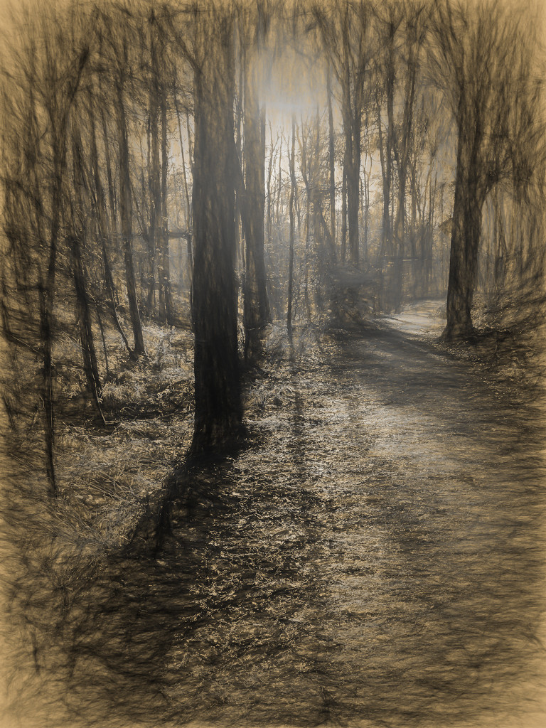 Same woods - different process by pamknowler