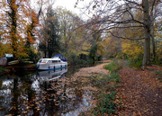 16th Nov 2020 - Nov 16th Basingstoke Canal