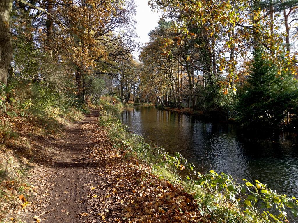 Nov 17th Basingstoke Canal by valpetersen