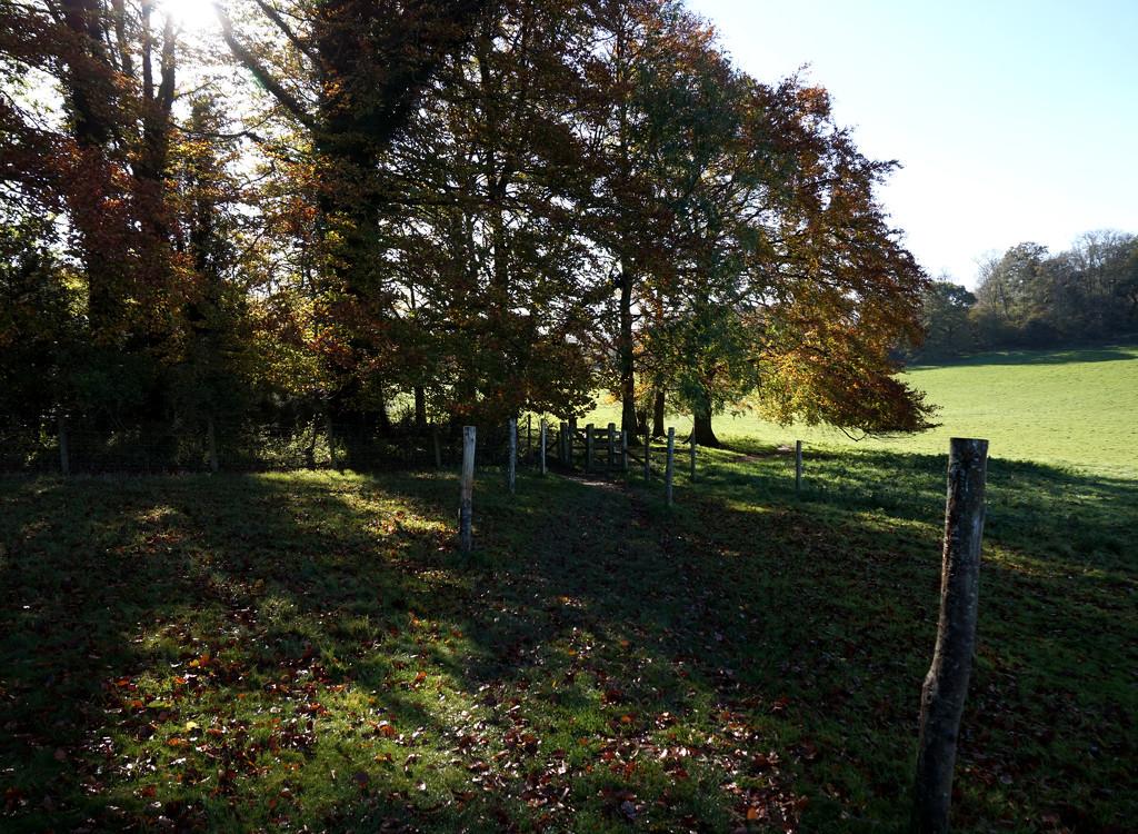 15th Nov Walk at Hinton Ampner by valpetersen