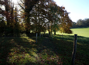 15th Nov 2020 - 15th Nov Walk at Hinton Ampner