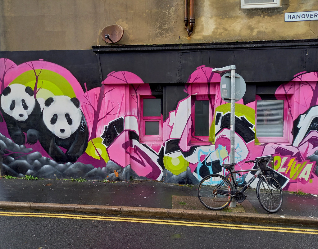 17th Nov Pandas in Brighton by valpetersen