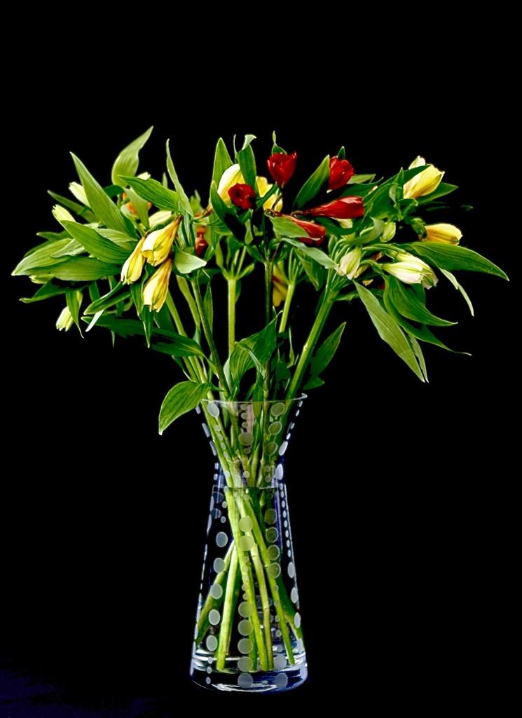Alstroemeria Display by carole_sandford
