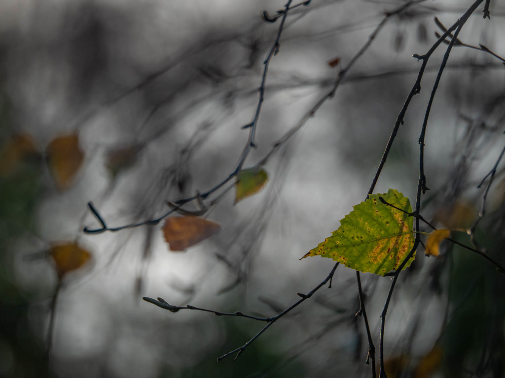 Late autumn by haskar