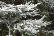25th Nov 2020 - First Michigan snowfall