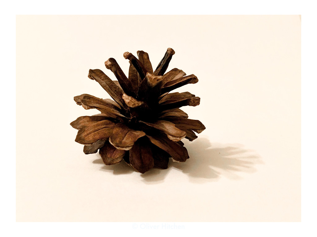 """Title: """"Pinecone"""" by doubleclix"""
