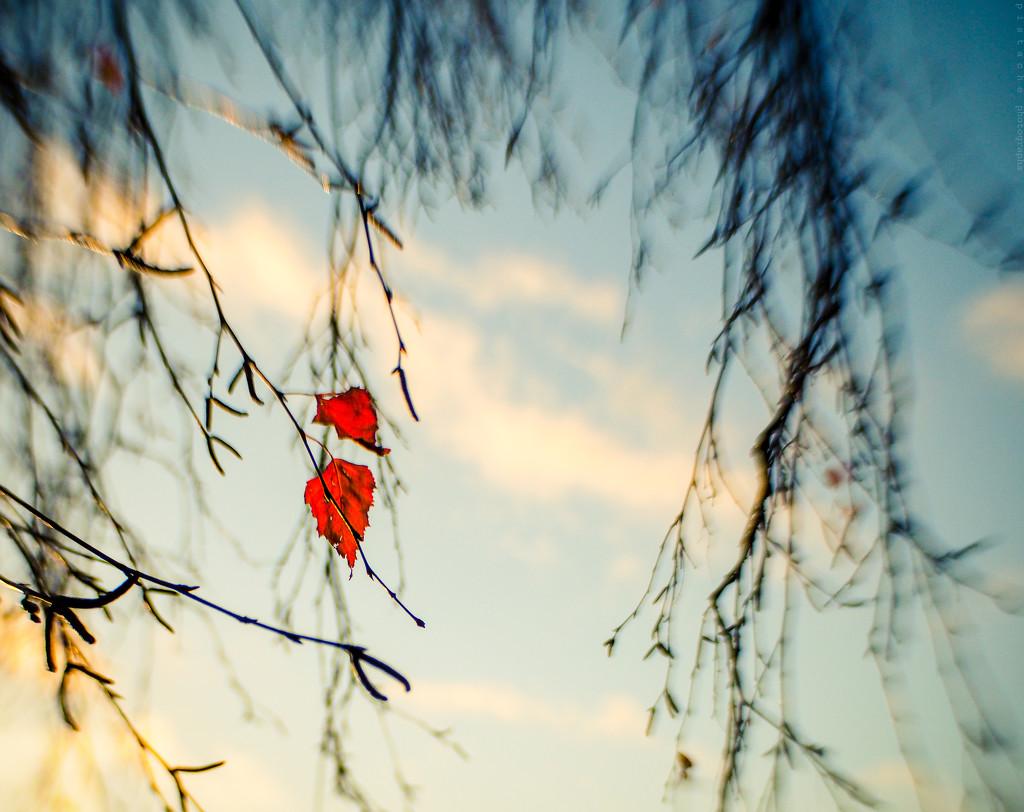scarlet by pistache