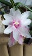 24th Nov 2020 - Full Frontal Flower