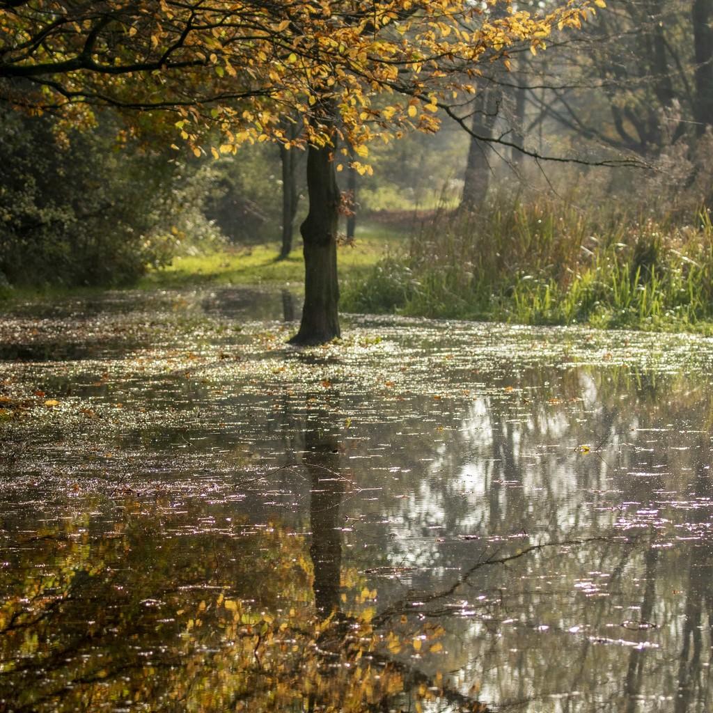 Autumn Floods by shepherdmanswife