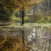25th Nov 2020 - Autumn Floods
