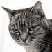 Pet Pawtrait - Chania