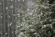 25th Nov 2020 - Snow fall