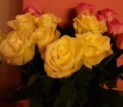 26th Nov 2020 - Roses.