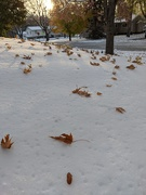 21st Oct 2020 - Leaves falling on top of the snow