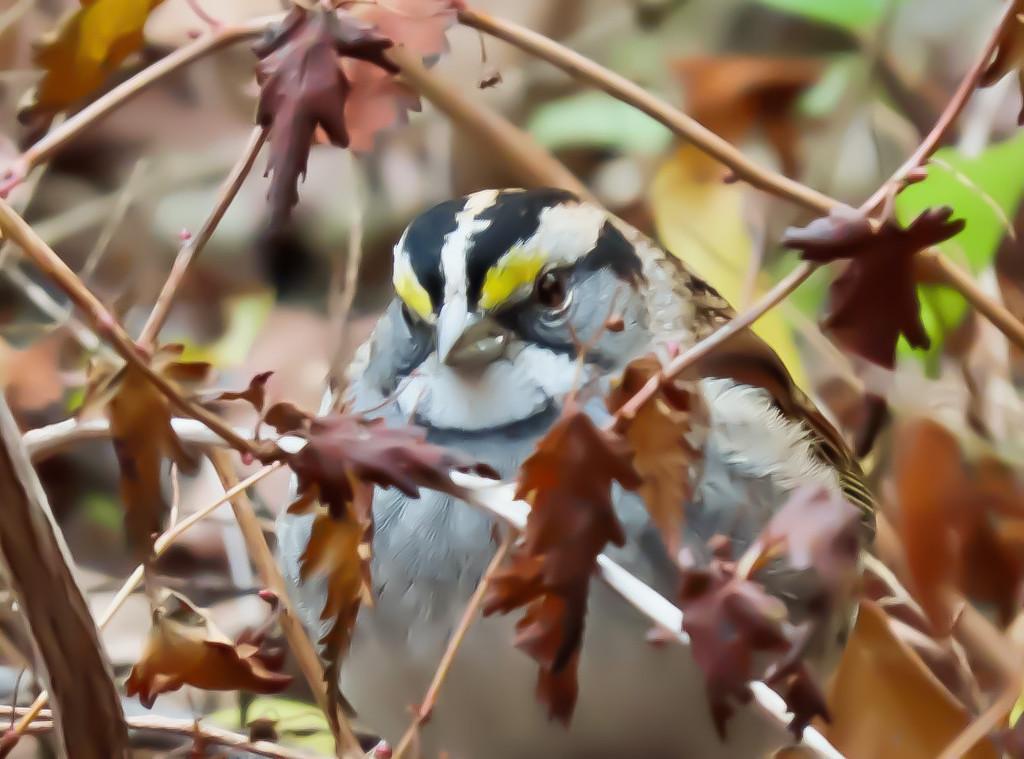 A Bird in a Bush by mzzhope