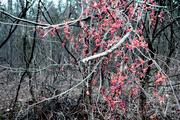 17th Nov 2020 - berries