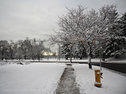 25th Nov 2020 - winter wonderland