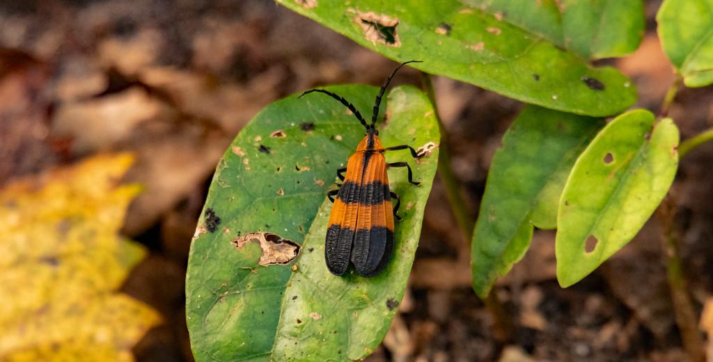 Halloween Bug! by rickster549