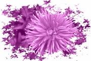 26th Nov 2020 - had to be purple
