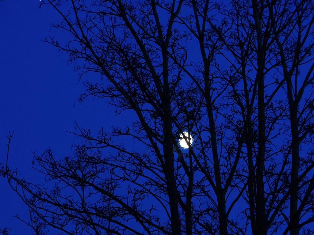 The moon from bedroom window by jon_lip