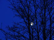 27th Nov 2020 - The moon from bedroom window