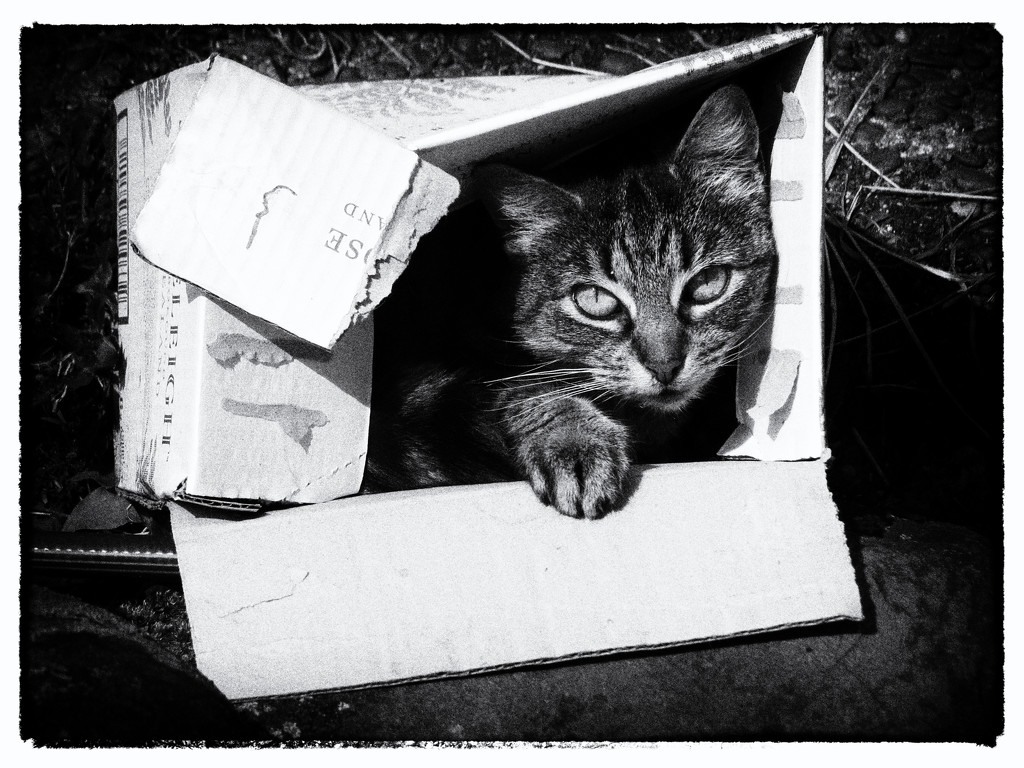 çats love boxes by kali66