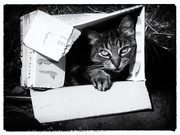 24th Nov 2020 - çats love boxes