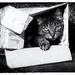 çats love boxes