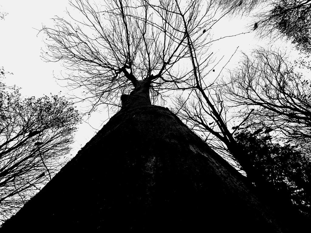 Looking up by isaacsnek