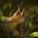 Squirrel by bpfoto
