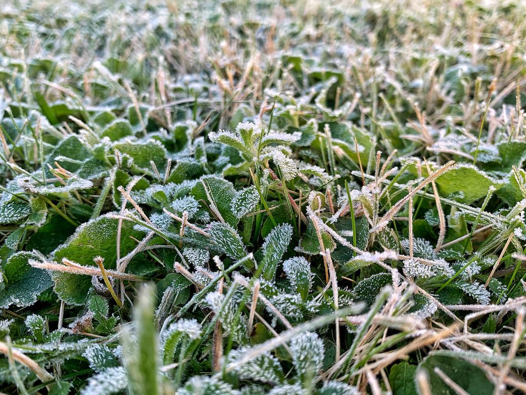 Frozen.  by cocobella