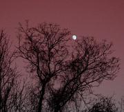 22nd Nov 2020 - moon