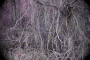 20th Nov 2020 - edge of the woods