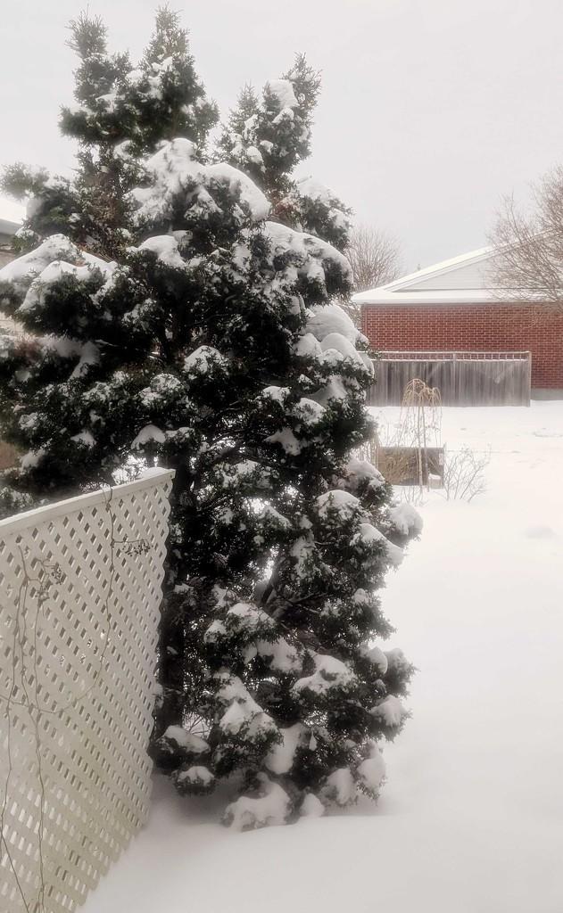 Snowy Tree by gq
