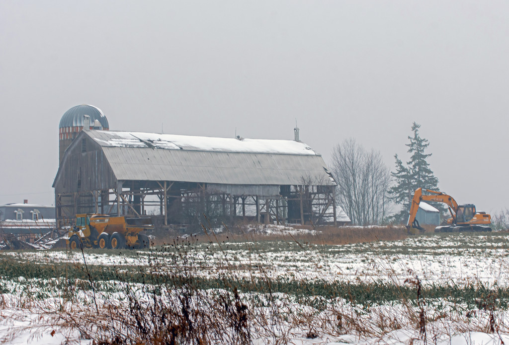 Another Glengarry Giant Comes Down by farmreporter