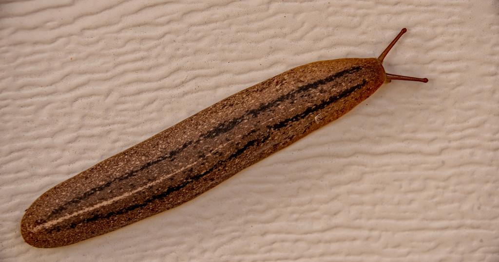 Slimy Slug! by rickster549