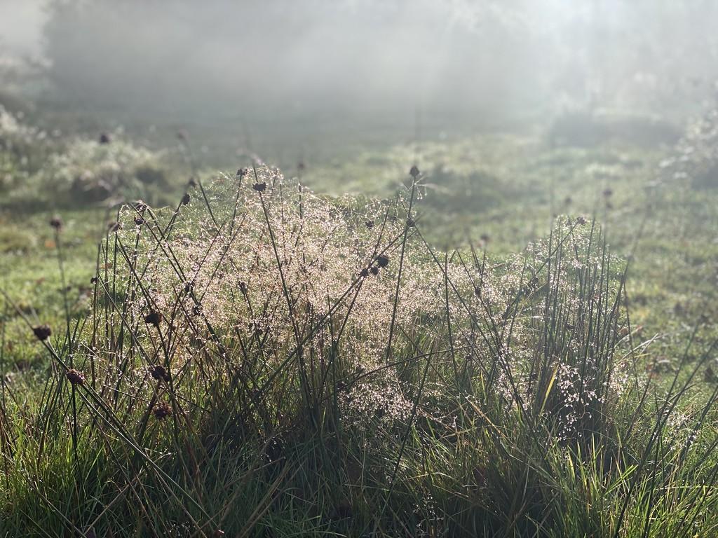 Misty morning walk by tinley23