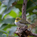 SILVEREYE by glendamg