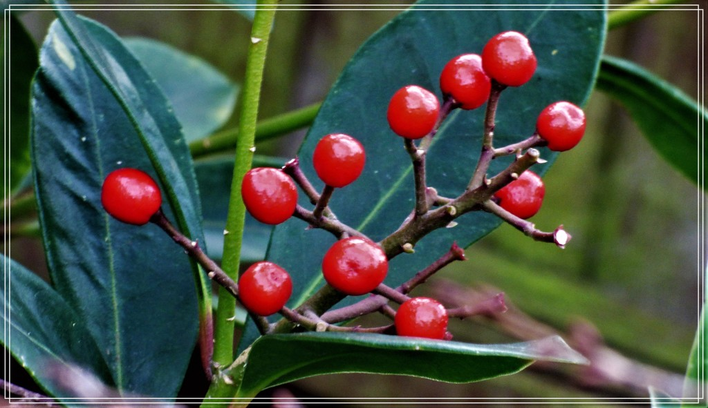 Berries in the garden by beryl