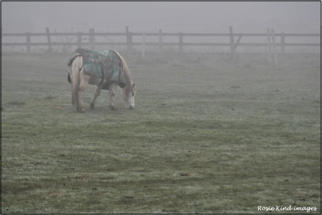 In the fog by rosiekind