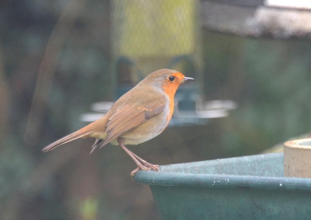 Robin by arkensiel