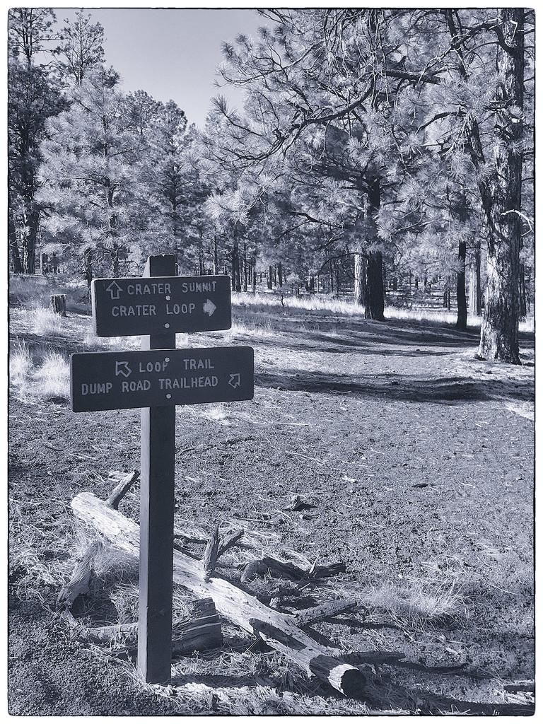 Generic trail names by joysabin