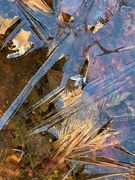 26th Nov 2020 - Frozen bird bath