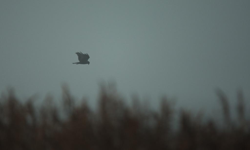 A Foggy Morning by ilovelenses
