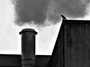 24th Nov 2020 - Bird and Steam