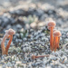 Tiny mushrooms by haskar