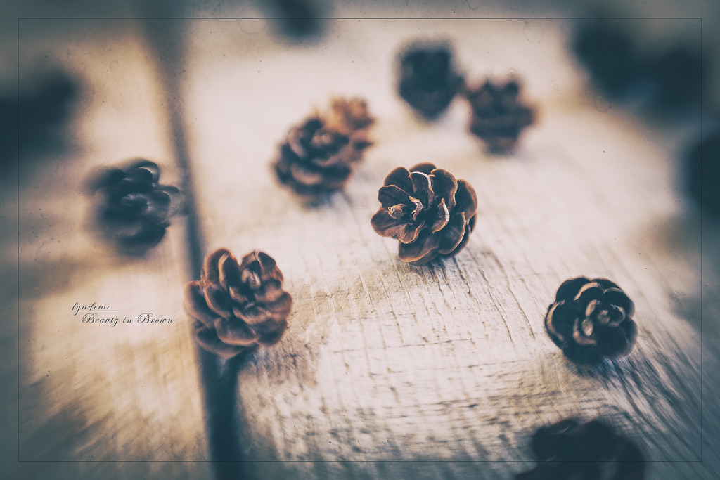 Tiny Pines by lyndemc